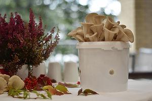 Vi dyrker østerssopp på kaffegruten til våre kunder.