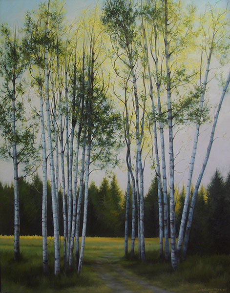 Spruce Canyon Birches