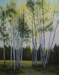 Spruce Canyon Birches