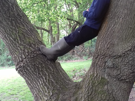 Forest School Assistant needed, for a project in partnership with the Institute of Mental Health