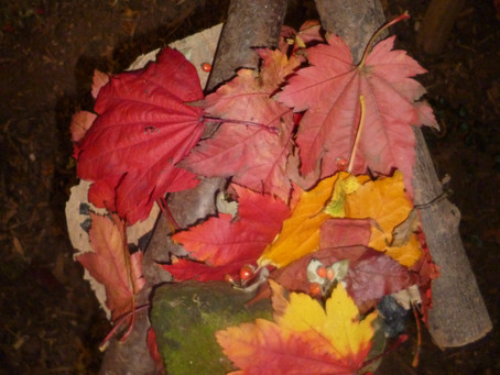 Autumn Forest school sessions