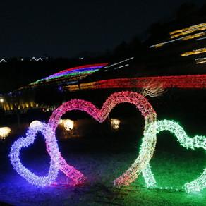 เทศกาลโคมไฟชาโบซอง (Boseong Tea Plantation Light Festival (보성차밭 빛축제))