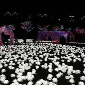 เทศกาลแสงไฟที่ทำให้ค่ำคืนแห่งฤดูหนาวสดใสขึ้น