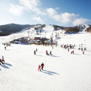 [Korea] ฤดูแห่งสกีเริ่มขึ้นแล้วที่เกาหลี