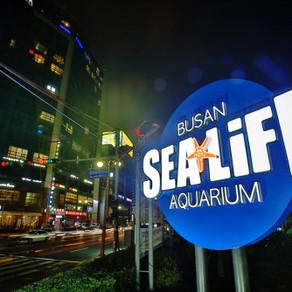 ซีไลฟ์ปูซานอควาเรียม SEA LIFE Busan Aquarium