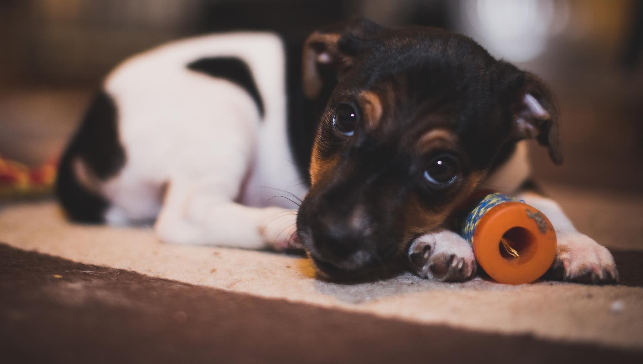 Puppy Visits