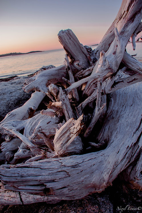 PopHam Driftwood Sunset