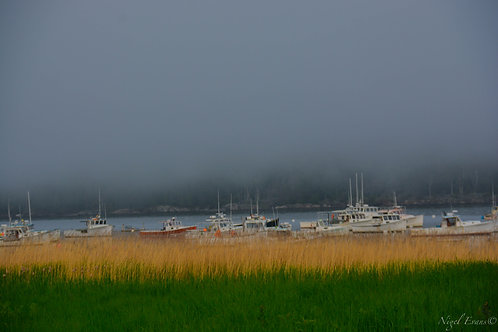 Boats over grass