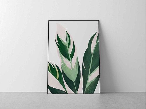 Stromanthe Sanguinea Print