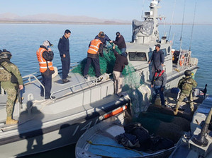 Reporta Conapesca la retención precautoria de 377 mil 178 kilogramos de producto marino