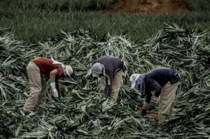 Arranca FAO sesión virtual sobre Estadísticas Agrícolas y Pecuarias para América Latina y el Caribe