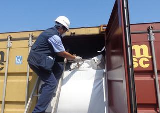 Evitan ingreso de 117 plagas al país con el rechazo de mil 449 embarques comerciales de riesgo