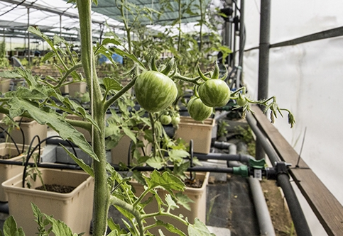 Decisiva, participación de ciencia e innovación para el futuro de los sistemas agroalimentarios