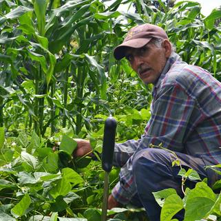 Expertos coinciden en que sí hay opciones viables para suplir los agrotóxicos