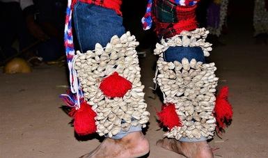 El ténabari, más que un capullo para los yaquis