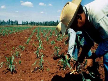 Capacitará INIFAP a agricultores para mejorar rendimiento de cultivos prioritarios