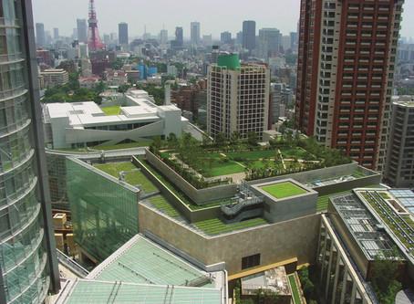 Propone diputado instalar techos verdes en edificios públicos