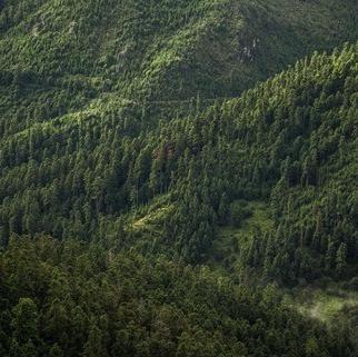 Recuperan 205 mil metros cuadrados en Tlalpan de áreas naturales