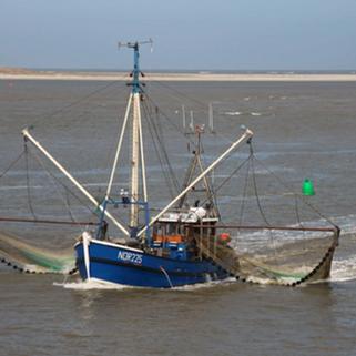 Informa Conapesca que el camarón de ribera podrá seguir exportándose a Estados Unidos