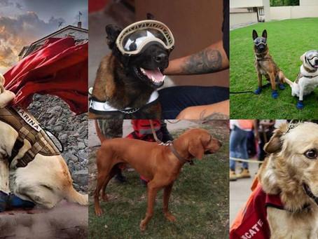 Los perritos rescatistas del 19-S