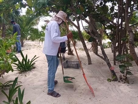 Gobierno de Solidaridad intensifica trabajos de limpieza en Playa del Carmen