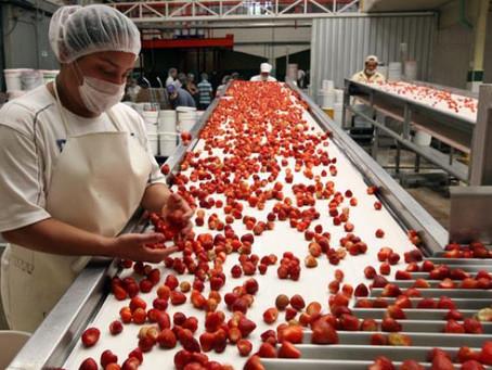 El sector de alimentos es vital ante la pandemia por COVID-19