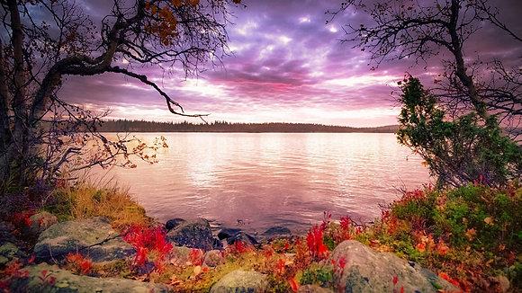 Autumn's Night