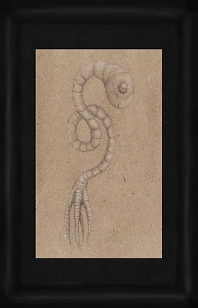 35a (worms).jpg
