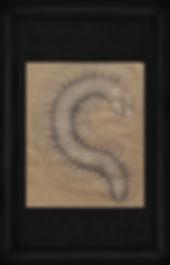 0035e (worms).jpg