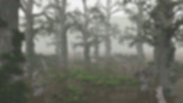 kowalczyk_v022.jpg