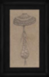 0014a (fungal).jpg