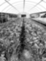 Greenhouse, UK.jpg