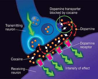 cocaine_neuron.jpg