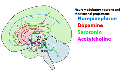 neuromodulators.png