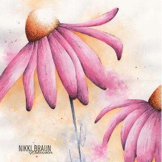 pink coneflower.jpg
