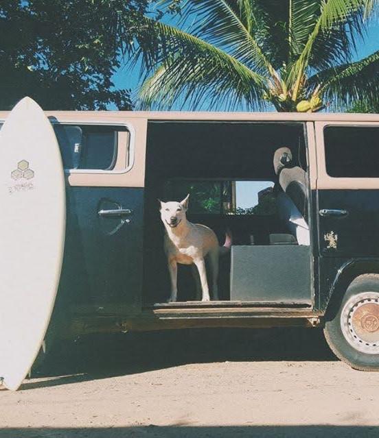 surfvan.jpg