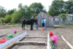 black pony, equine assisted learning, ladies