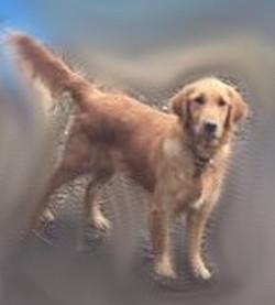 Bailey 4