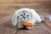 environnement stimulant chat réduire stress mode de vie intérieur problèmes urinaires
