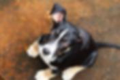 dog-2448858__340.webp