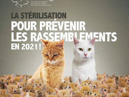 Semaine de la stérilisation animale 2021