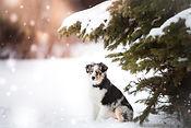 conseils chien chiot hiver éviter engelures prévenir accidents