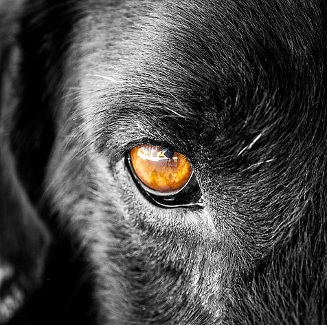 dog-5105263_960_720.jpg