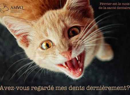 Février: le mois de la santé dentaire