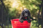 apprendre à son chien à tailler couper les griffes, laver lavage prendre son bain, nettoyer les oreilles, tailler griffes chat, poser protèges-griffes sans stress