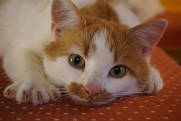 cat-2830802_1920.jpg
