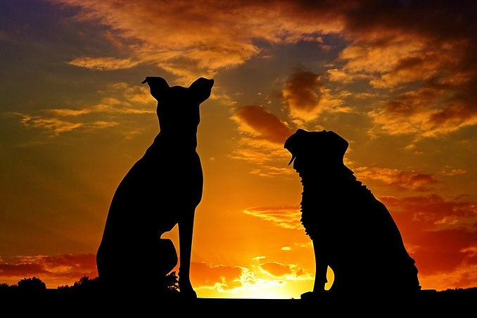 dogs-2222801_960_720.jpg