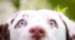 Dalmatien curieux d'aller fouiner sur les adresses sous Liens Utiles...