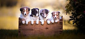 chiot chien vaccination vermifugation soins vétérinaires stérilisation, micropuce, micropuçage assurances pour animaux prévention parasitaire antiparasitaire estivale rendez-vous