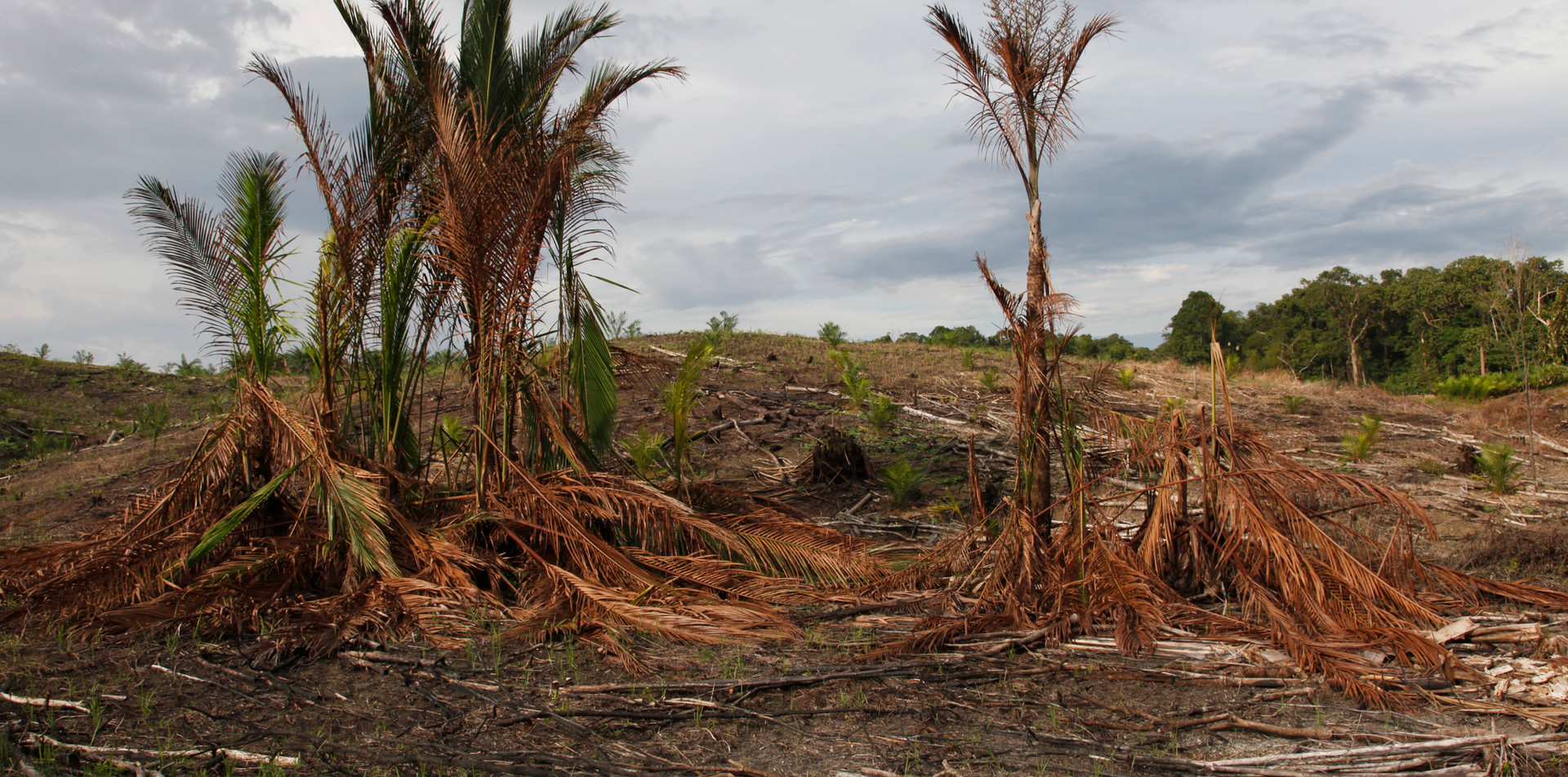 Deforestation to grow a palm oil plantation in Borneo, Malaysia